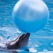 Dolphin with ball — Stock Photo