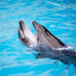 Dolphins are dancing — Stock Photo