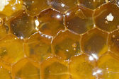 Honey comb — Stockfoto