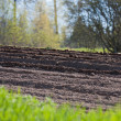 Stock Photo: Agricultural soil in springtime