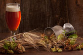 Beer with hops and barley — Stock Photo