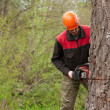 Cutting the tree — Stock Photo
