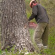Felling the tree — Stock Photo #21759285