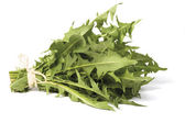 Dandelion greens — Stock Photo