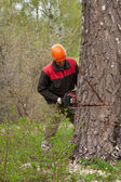 Forestry worker — Stock Photo