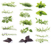 Fresh herbs — Photo