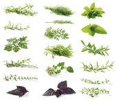 świeże zioła — Zdjęcie stockowe