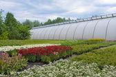 Greenhouse in garden — Stock Photo