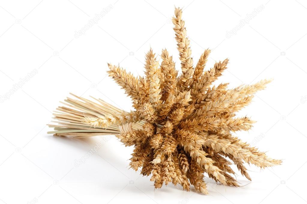 http://st.depositphotos.com/2099025/2196/i/950/depositphotos_21964843-Sheaf-of-ripe-wheat.jpg