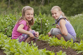 Two sisters working in vegetable garden — Stock Photo
