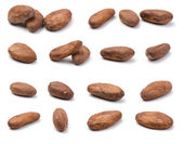 Variety of cocoa beans — Stock Photo