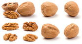 Various Walnuts — Stock Photo