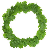 Oak wreath — Stock Photo