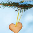 Heart-shaped gingerbread on spruce — Stock Photo #36848265