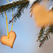 Heart-shaped gingerbread on spruce — Stock Photo #36848769