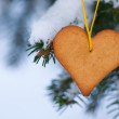 Heart-shaped gingerbread on spruce — Stock Photo #36848789