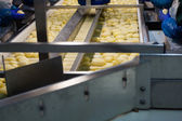 Potato Processing conveyor — Stock Photo