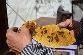 Honey bee workers on honeycomb — Stock Photo