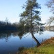 Stock Photo: Tree over lake