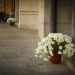 Stockfoto: Temps de Flors, at Girona