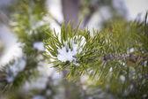雪の自然の詳細 — ストック写真