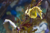 Seahorses — Stock Photo