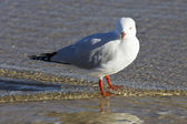 Seagull in the beach — Stock Photo