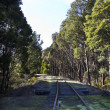 Railway in the forest — Stock Photo