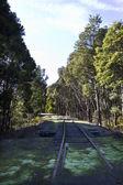 Järnvägen i skogen — Stockfoto