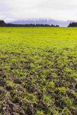 Kaikoura landscape — Stock Photo