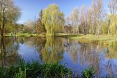 Small pond in the park on a sunny autumn day — Stock Photo