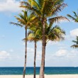 Palm trees in the beach, Miami — Stock Photo #27905399