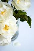 Marchitas rosas en un jarrón — Foto de Stock