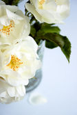Wilted roses in a vase — Stock Photo
