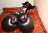 Boxer — Photo