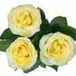 Three yellow roses — Stock Photo