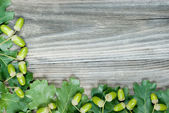 Border of green oak leaves and acorns — Stock Photo