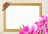 Frame with pink peony flower and butterfly — Photo