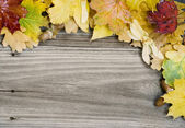 Background of multicolored autumn leaves — Stock Photo