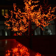 Luminous tree — Stock Photo