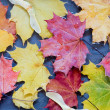 Maple leaves in a puddle — Stock Photo