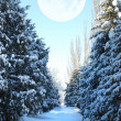 Snow-covered fur-tree alley — Stock Photo