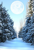 Snow-covered fur-tree alley — ストック写真