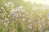 Early summer morning — Stock Photo