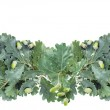 Garland of oak branches — Stock Photo