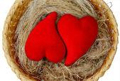 Cozy nest — Stock Photo