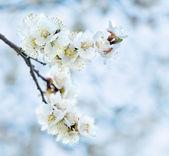 Spring morning — Stock Photo