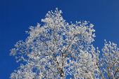 Hoarfrost on branches of a tree — Foto Stock