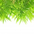 Bamboo leaf - border design — Stock Photo