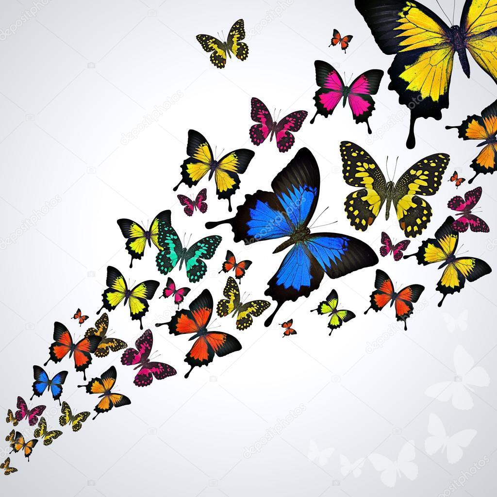 Рисунки стай бабочек